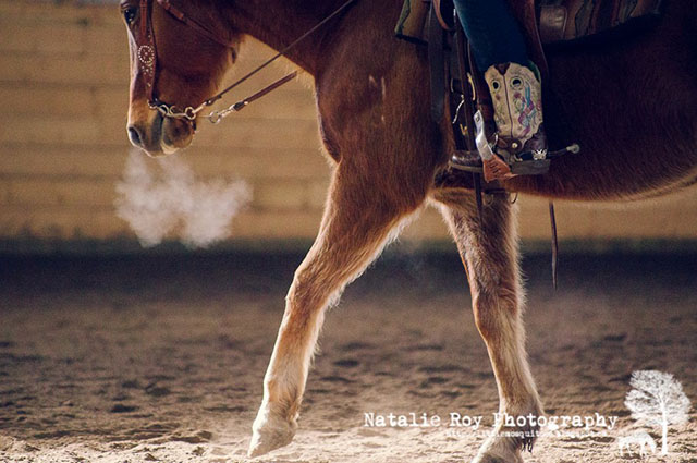 u bar ranch horse facilities