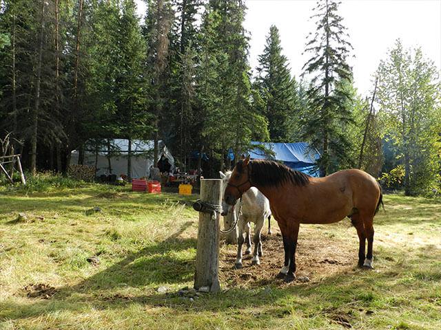 Horses_In_Camp_4