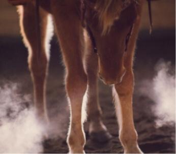 horse riding lessons alberta