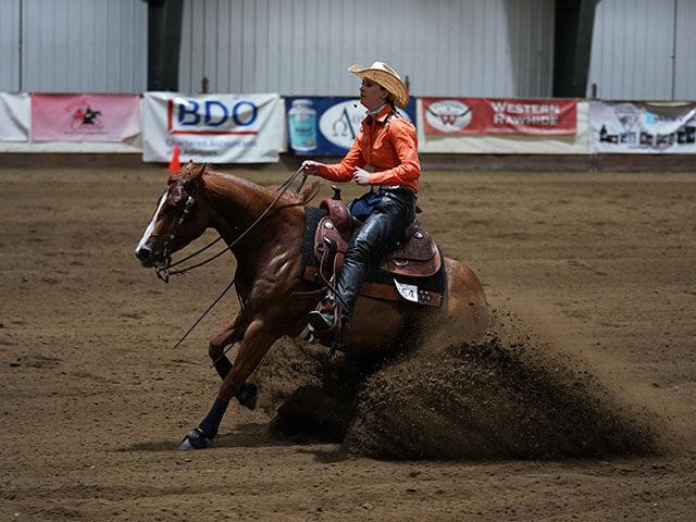 performance horse training