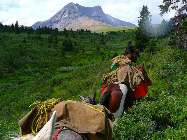 horse pack trips alberta