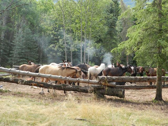 Horses_In_Camp